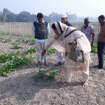 গোবিন্দগঞ্জে সাড়া জাগানো কৃষকের সবজি ক্ষেত পরিদর্শনে কৃষি কর্মকর্তা