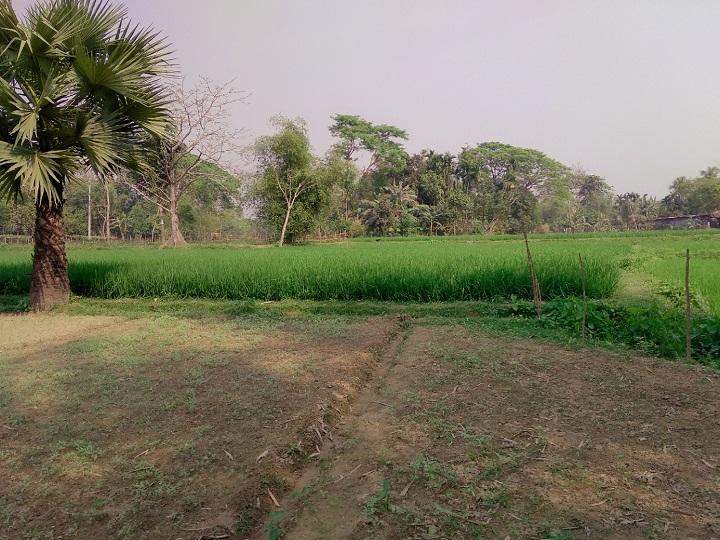 মেইনরোডের পাশে জায়গা বিক্রি হবে-দাপুনিয়া, ময়মনসিংহ
