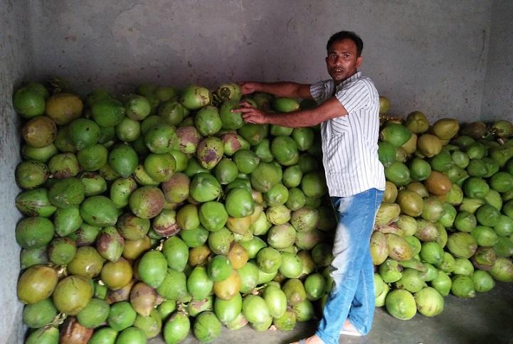 ডাব-কেনাবেচা-In the month of Narayel dub business of 25 million!