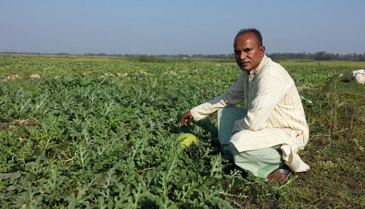 তরমুজের-বাম্পার-ফলন-Bamper yield of watermelon watermelon, peasants in hopes of profit