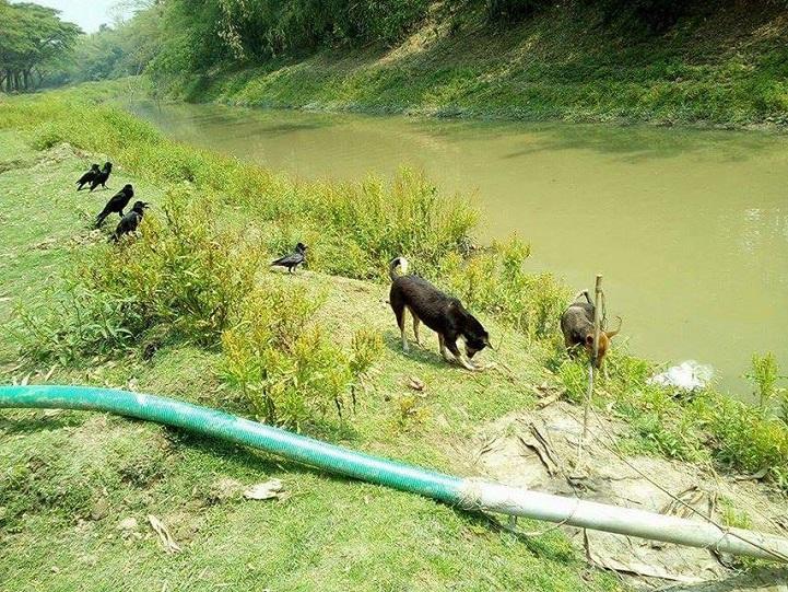 ত্রিশালে-স্বাস্থ্য-People in the river on the banks of the river have been at risk of health