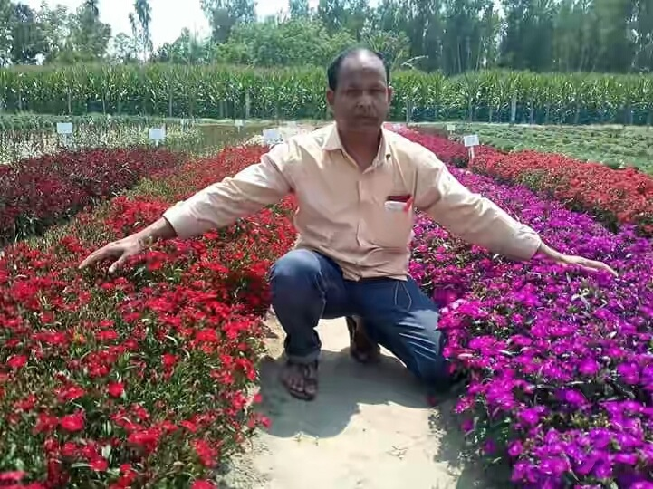 বিদেশী-ফুল-চাষ-It is possible to earn hundred crores by cultivating foreign flowers in Panchagarh