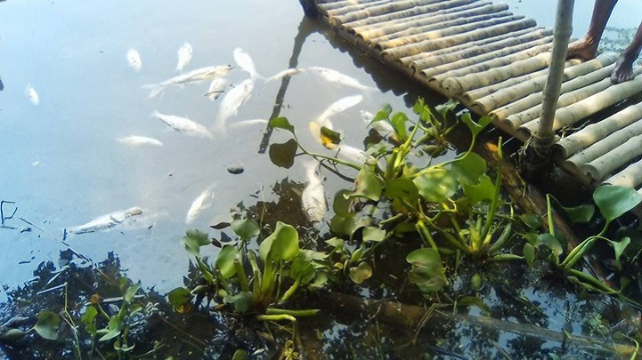 মাছ-নিধন-Destruction of fish by poisoning the Shailakupa bayadas loss of 2 million taka!