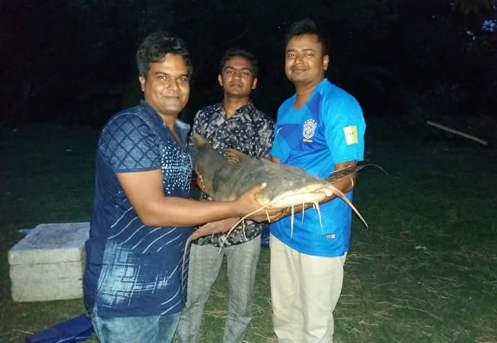গোদাগাড়ীতে ২৮ কেজি ওজনের বাঘাইর মাছ ধরা পড়েছে