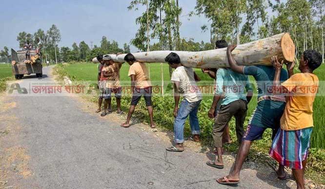 গোবিন্দগঞ্জে সাড়ে চার কিলোমিটার রাস্তার কোটি টাকার গাছ কেটে সাবাড়