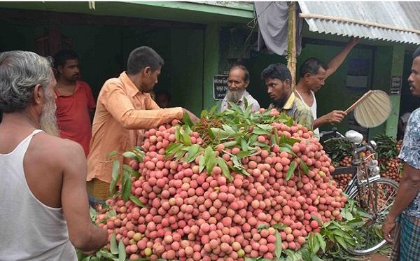 বাগমারায় লিচু ফলনে বিপর্যয়'বাজারে দাম চড়া