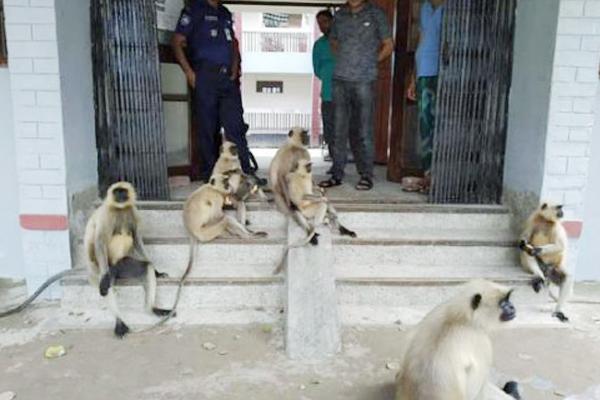 নির্যাতনের প্রতিবাদে কেশবপুর থানা ঘেরাও করল হনুমানের দল